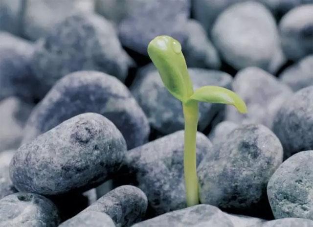 成长,使 自己变得强大