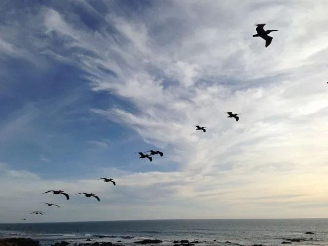 """博皓致力提供广阔的空间和强大的支撑让有梦、有能力的人发挥所长,超越自我,创造奇迹,正如""""海阔凭鱼跃,天高任鸟飞。"""""""