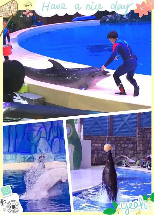 广东博皓亲子游:珠海长隆海洋王国,探索海洋生物的奥秘,剧场表演